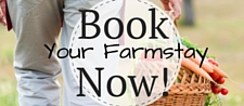 Book Now (2)