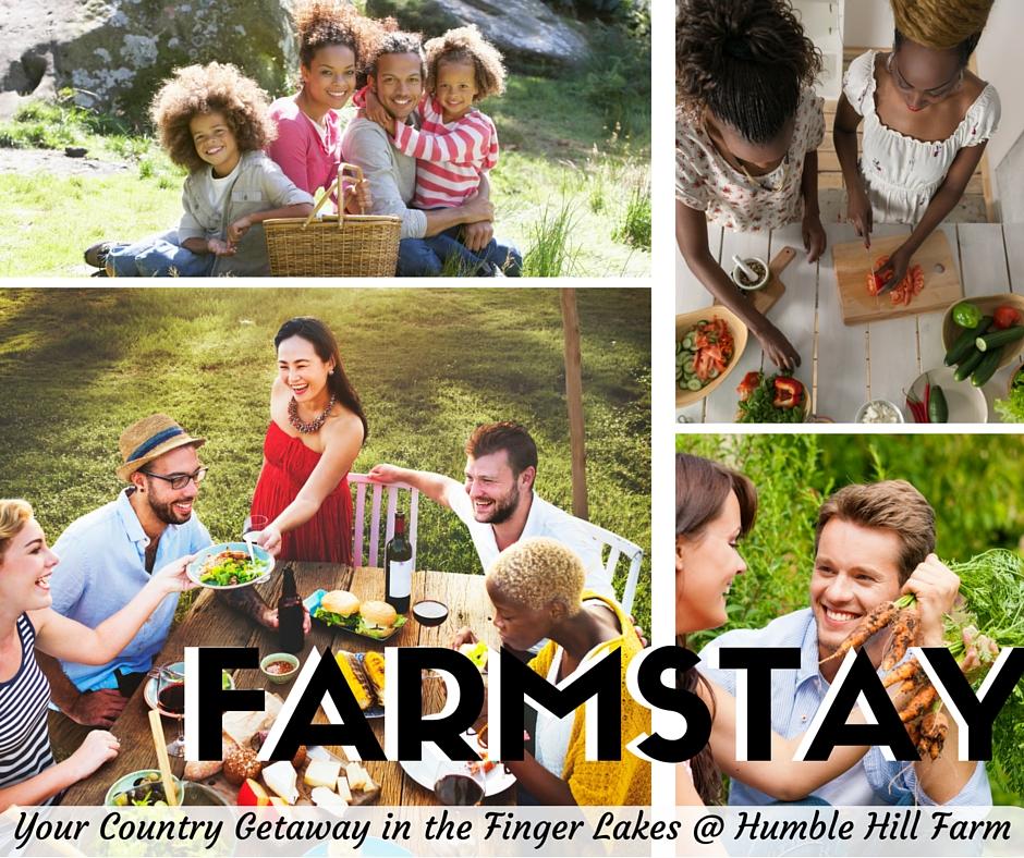 Farm Stay (1)boldblackand white lettersbestwinner